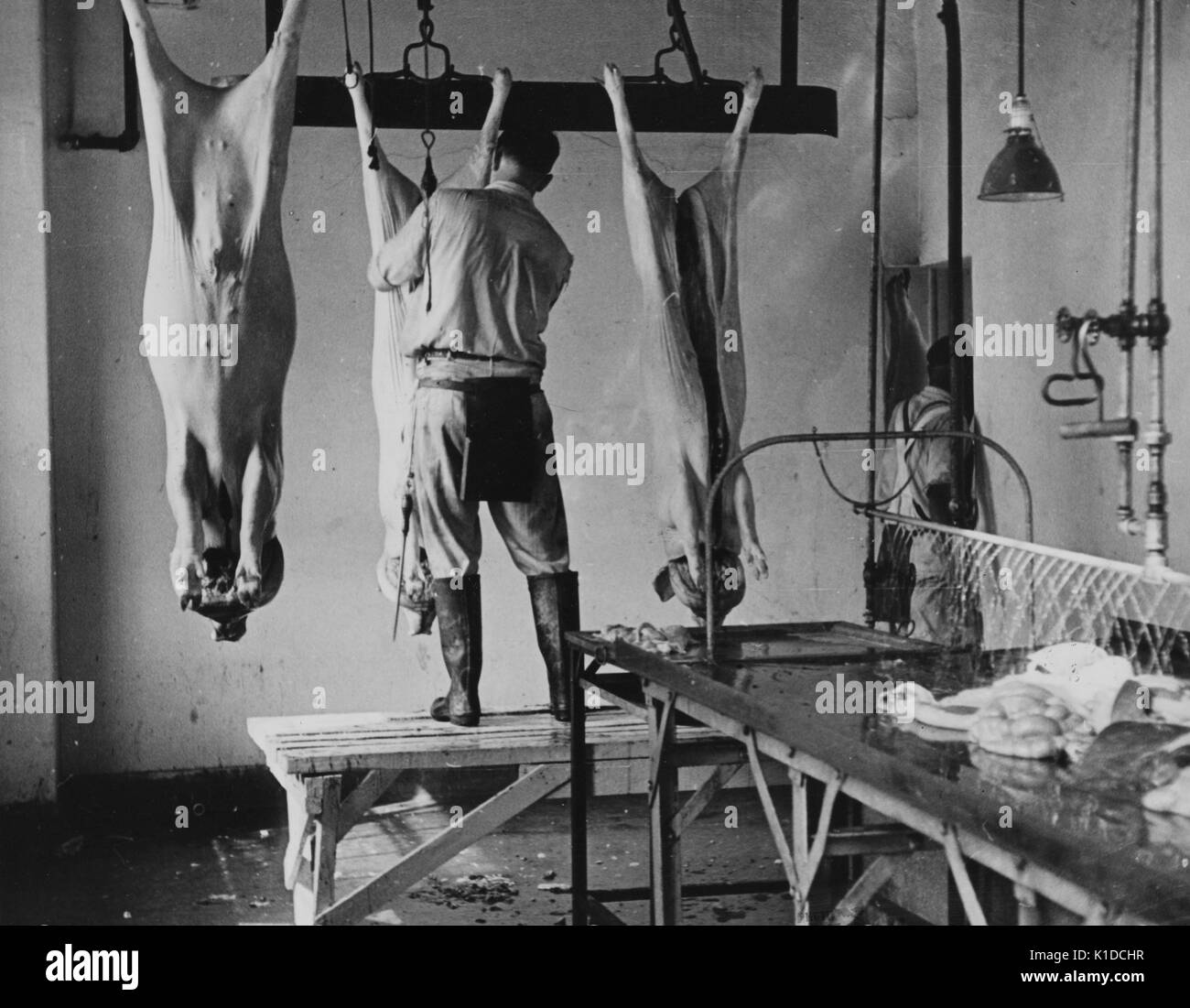 Work in slaughter house in the meat section at the experimental farm of the United States Department of Agriculture, Beltsville, Maryland, 1935. From the New York Public Library. - Stock Image