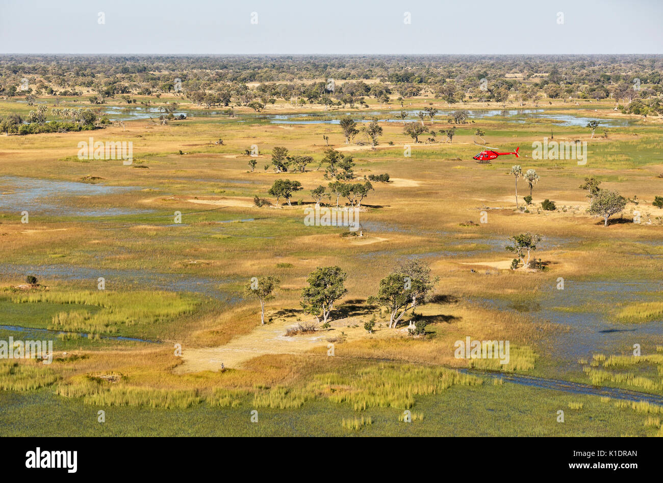 Freshwater marshes with streams, channels and islands, the helicopter is on a scenic flight, aerial view, Okavango Delta - Stock Image