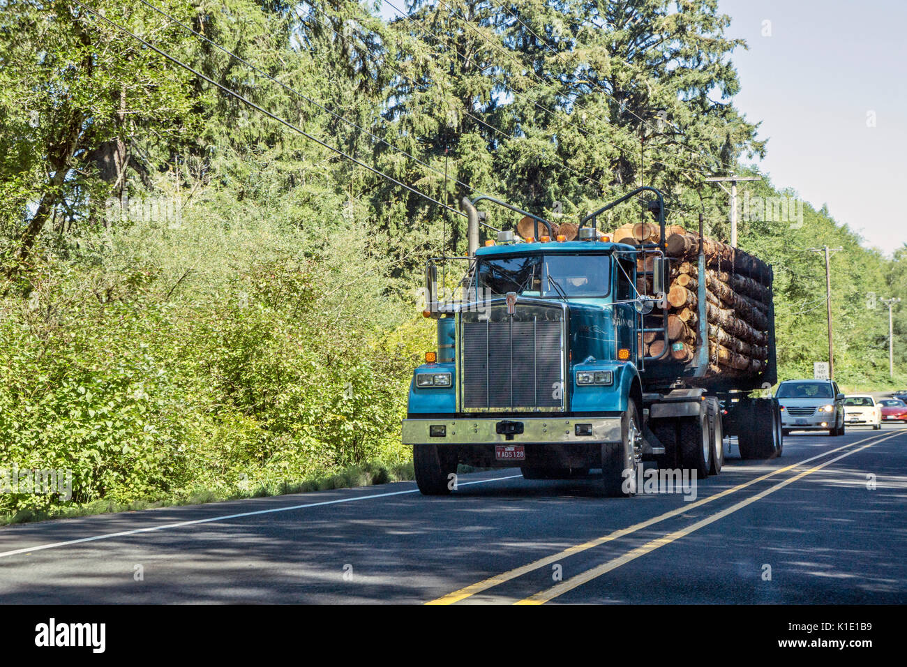 huge logging truck with bright blue cab loaded with fresh cut logs heading for coast highway holds up long line of cars in highway no passing zone - Stock Image