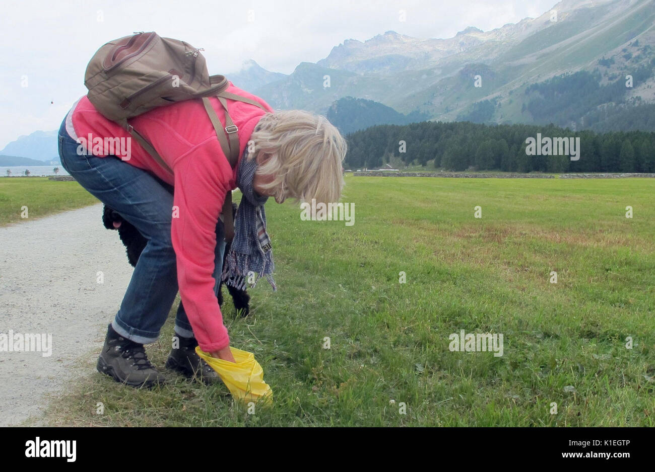 Graubunden, Switzerland. 21st July, 2017. Picture of Christa Alder picking up the waste of her dog Henry, taken at a meadow near Sils lake in the canton of Graubunden, Switzerland, 21 July 2017. Picking up Henry's s waste is par for the course for Christa even in fields, meadows and hiking trails. Photo: Christiane Oelrich/dpa/Alamy Live News - Stock Image
