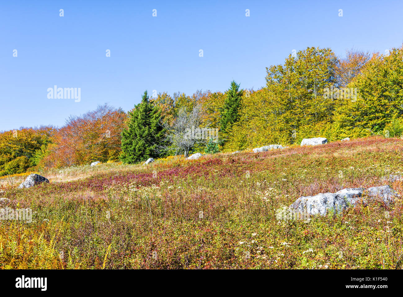 Rocky landscape meadow hill in Dolly Sods, West Virginia in autumn - Stock Image