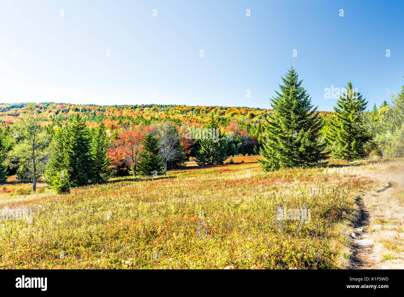 Rocky landscape meadow hill in Dolly Sods, West Virginia in autumn with trail path - Stock Image