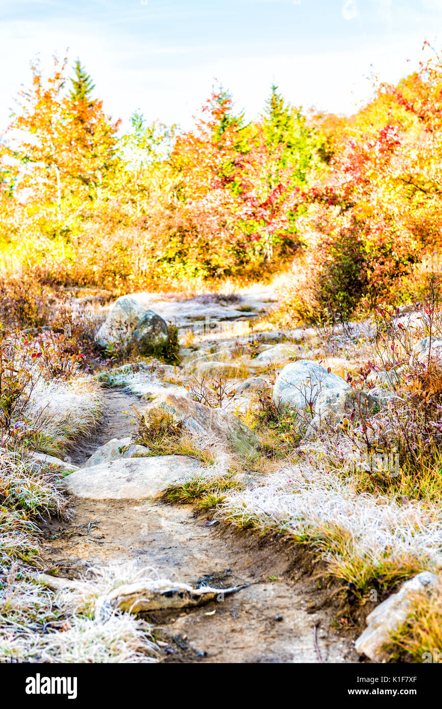 Frost iced trail path of rocks illuminated by morning sunlight at Dolly Sods, West Virginia - Stock Image