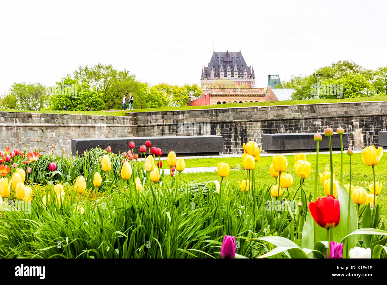 Quebec City, Canada - May 29, 2017: Green grass fields with colorful tulip flowers in park with fortifications stone wall and cityscape or skyline vie - Stock Image