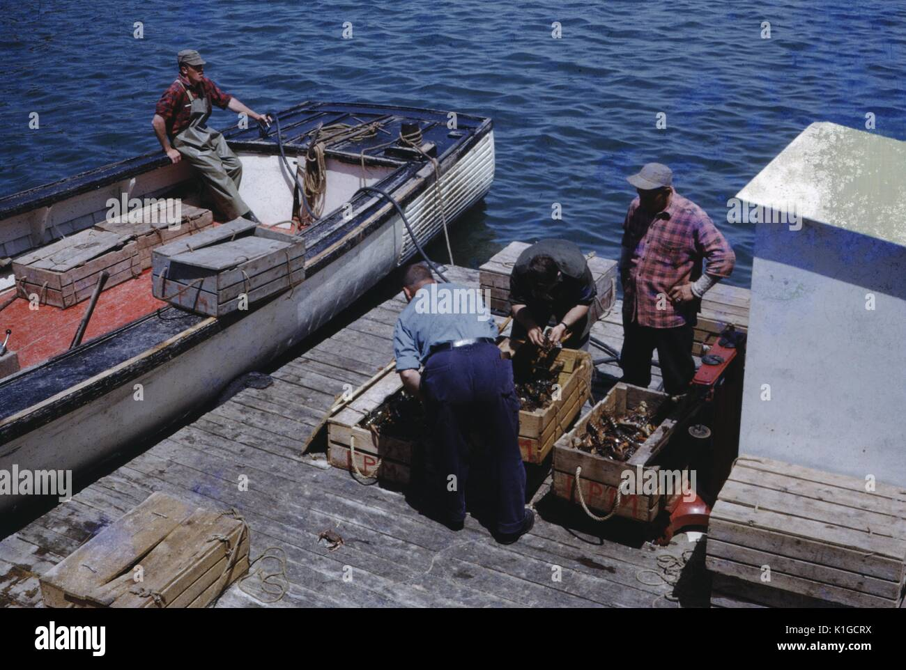 Four Fishermen Unloading Their Catch From A Boat Docked On A Wharf