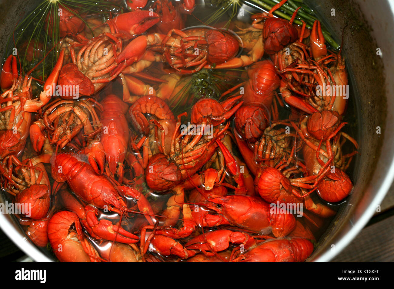 CRAYFISH new cooked cools in its broth - Stock Image