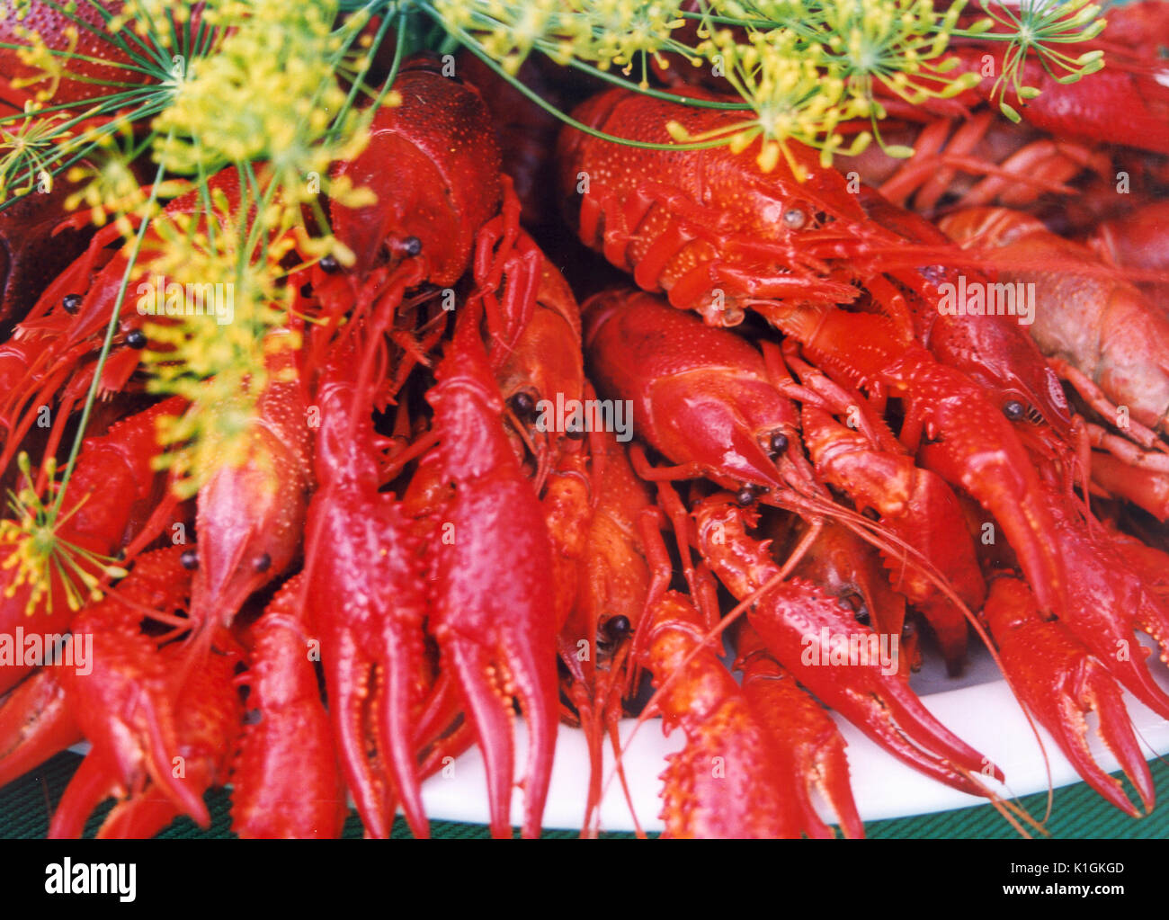 CRAYFISH ready for serving decorated with dill 2009 - Stock Image