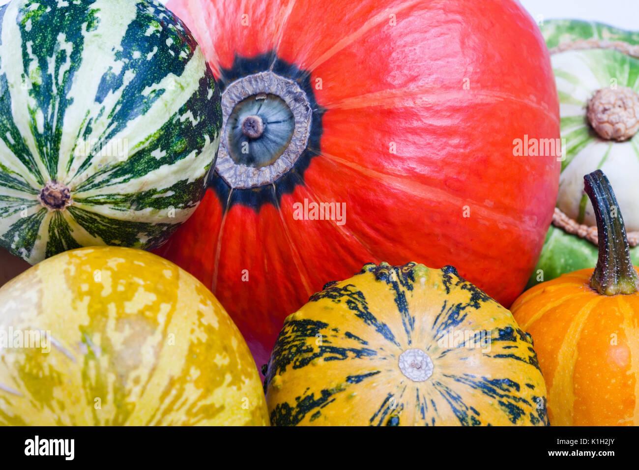Colorful pumpkins. Halloween pumpkins. Pumpkin varieties.  - Stock Image