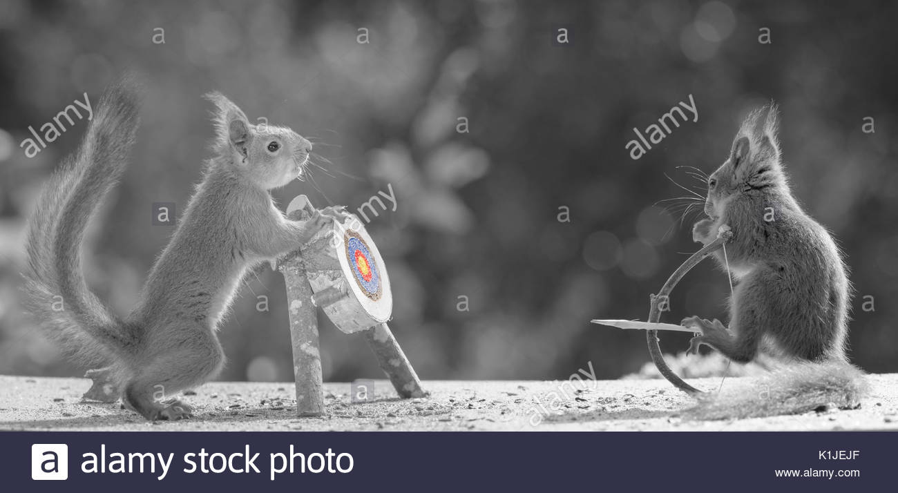 Red squirrels holding a Bow and Arrow with Target in black and white Stock Photo