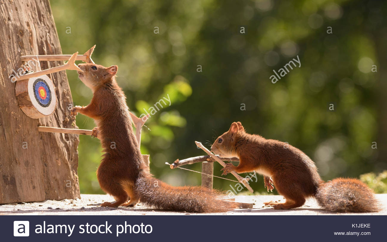 Red squirrels holding a catapult with Target Sports Stock Photo