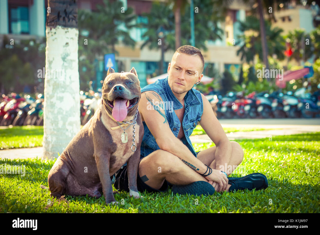 Happy friends man and dog american pit bull terrier sitting on grass in park - Stock Image