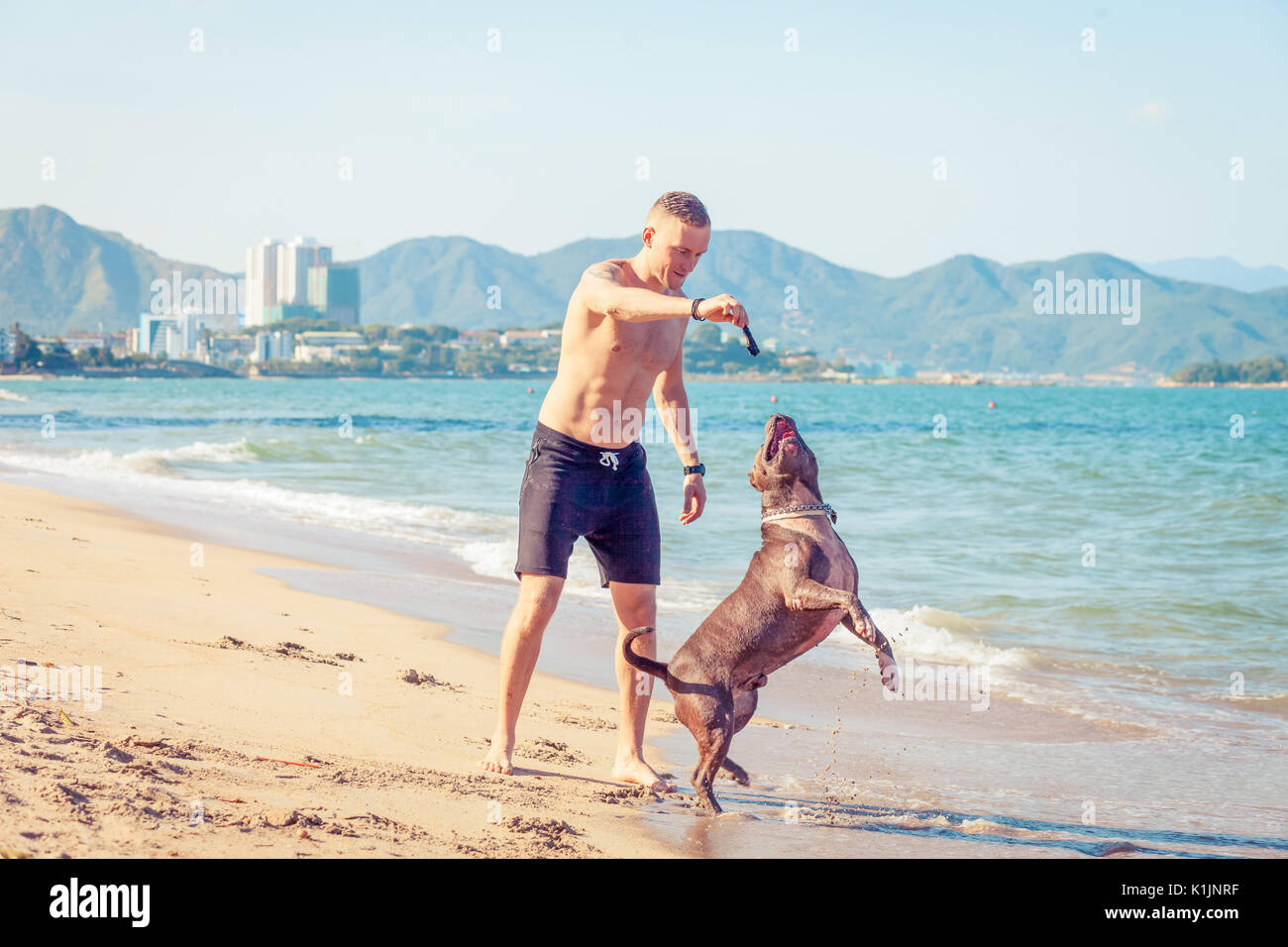 Young caucasian man playing with dog american pit bull terrier on beach. - Stock Image