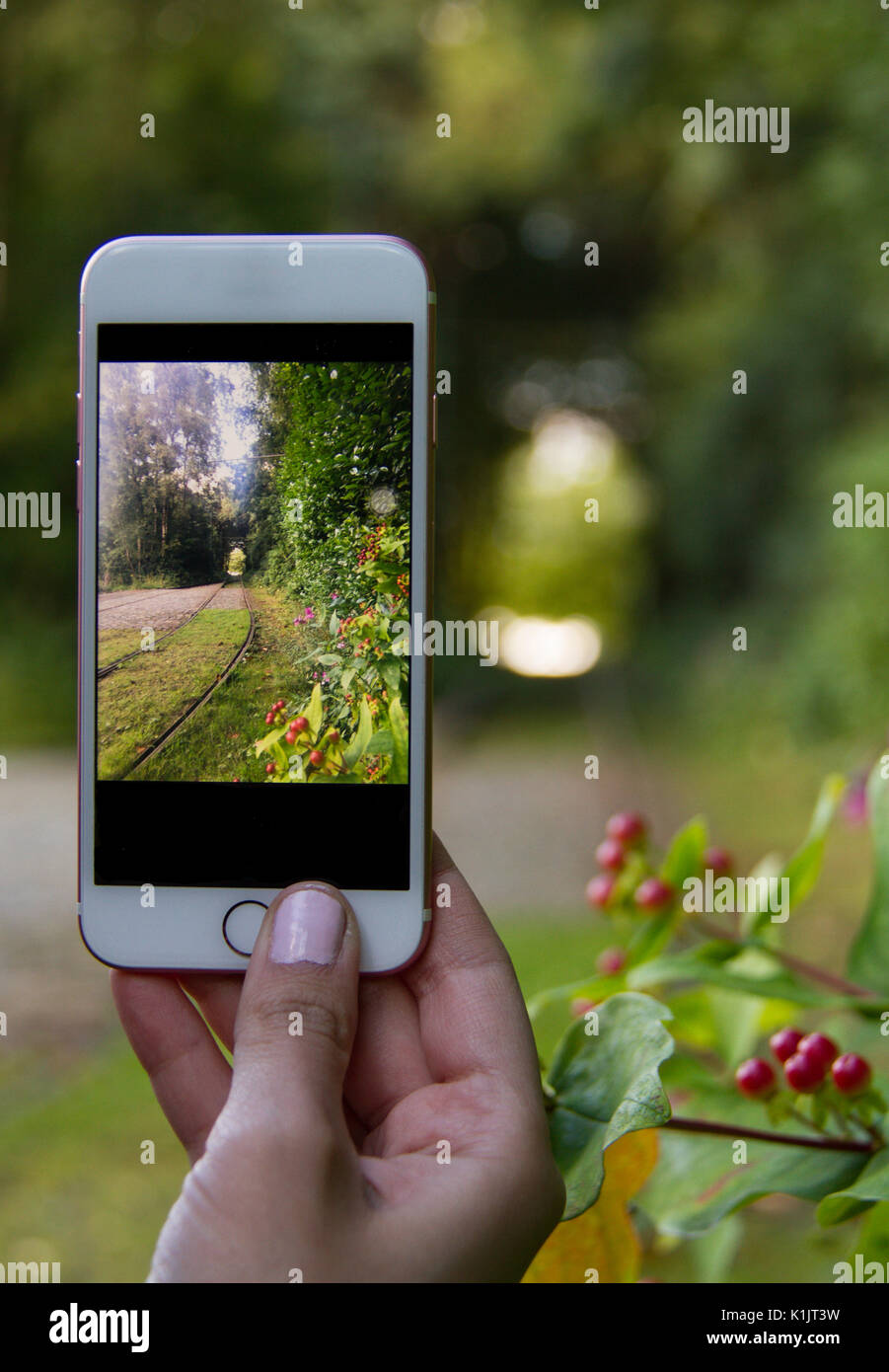 Woman hand takung photo using mobile phone of train lines in nature surroundings at Heaton Park, Manchester - Stock Image