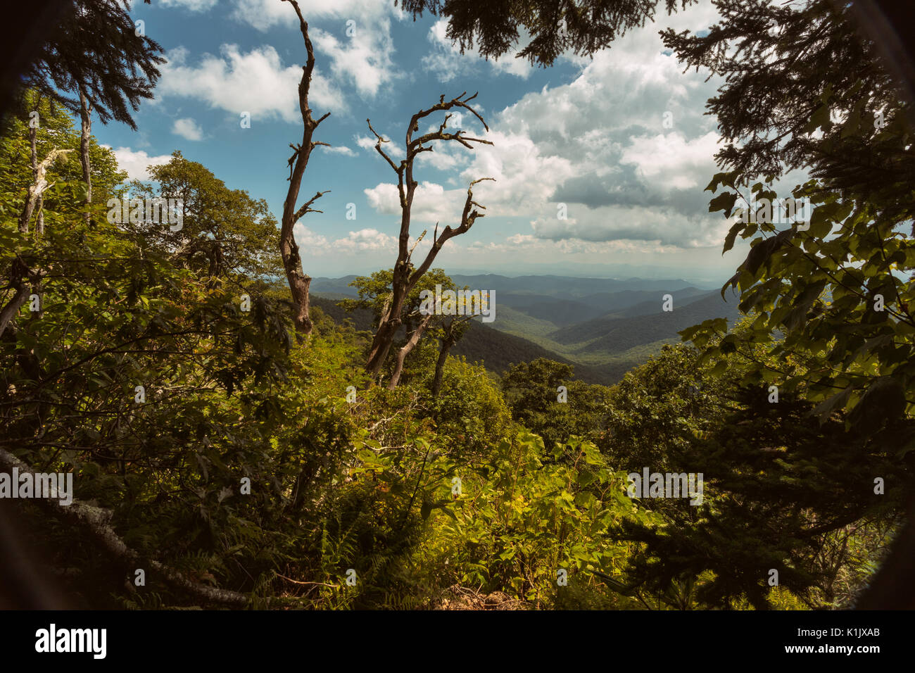 One of the many areas along the Blue Ridge Parkway where people can stop and gaze at the beautiful scenery of the - Stock Image