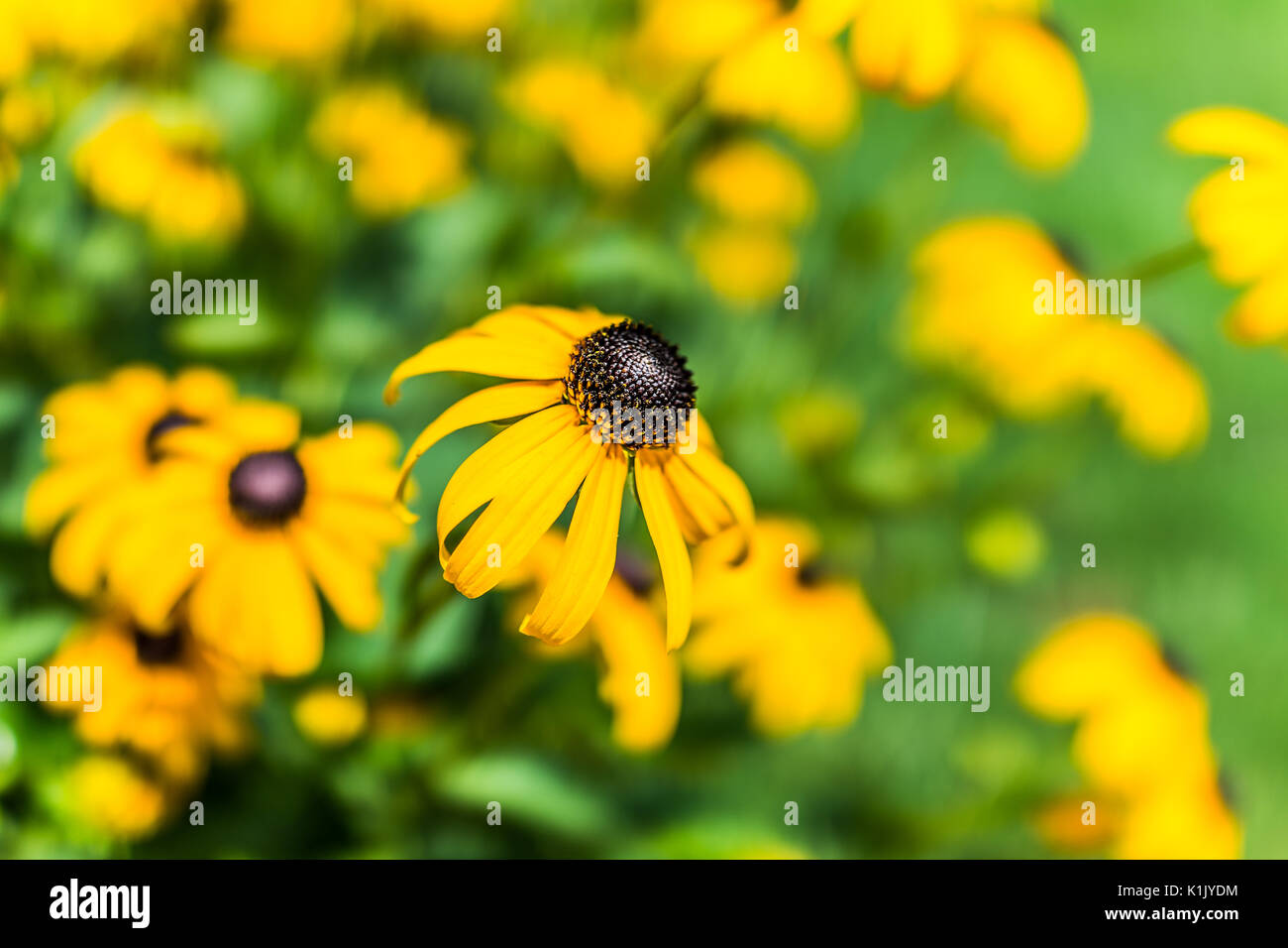 Flower With Black Center Stock Photos Flower With Black Center