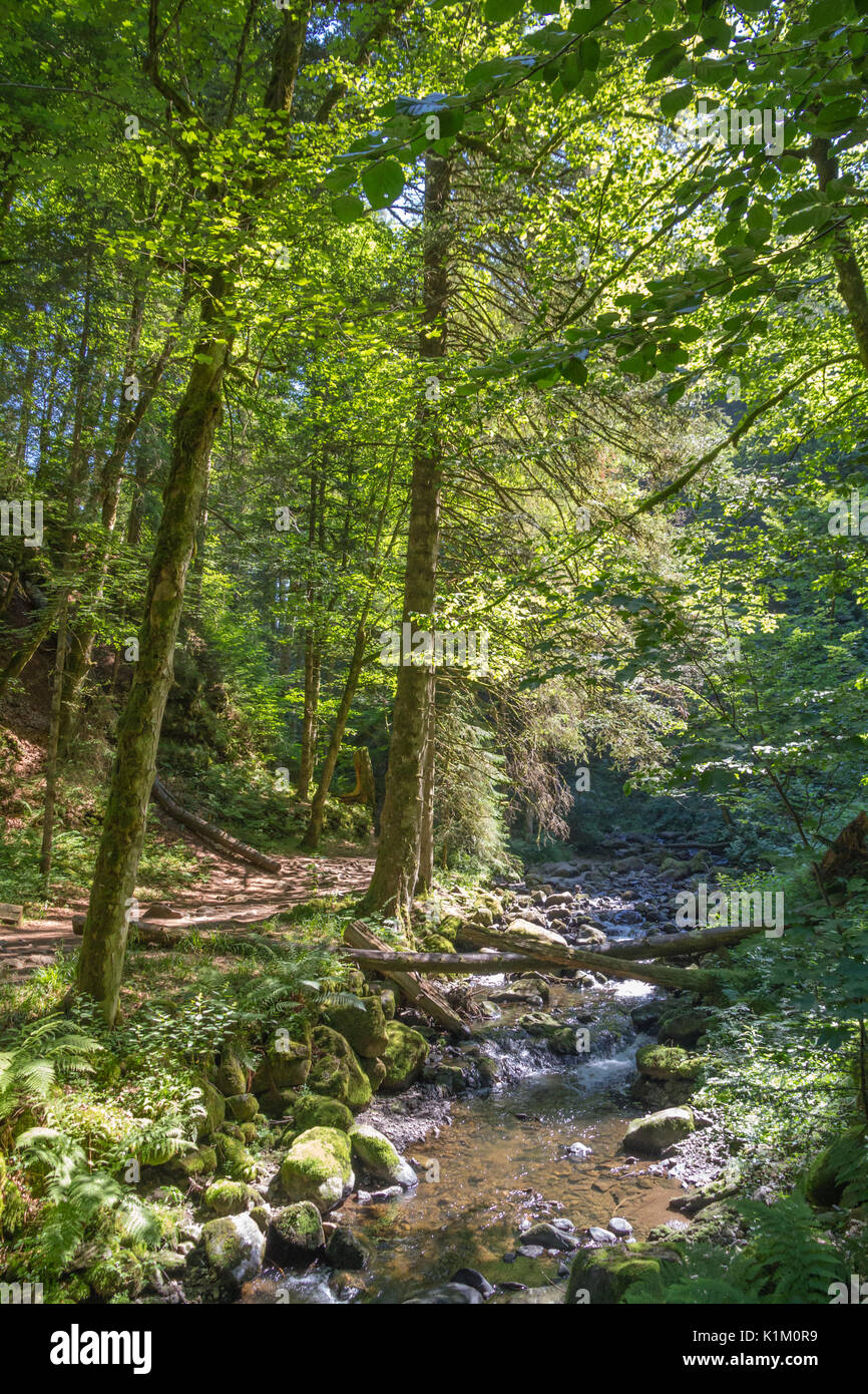 Vertical image of Raveena creek flowing through the treed Raveena Gorge in Germany's Black Forest region. - Stock Image