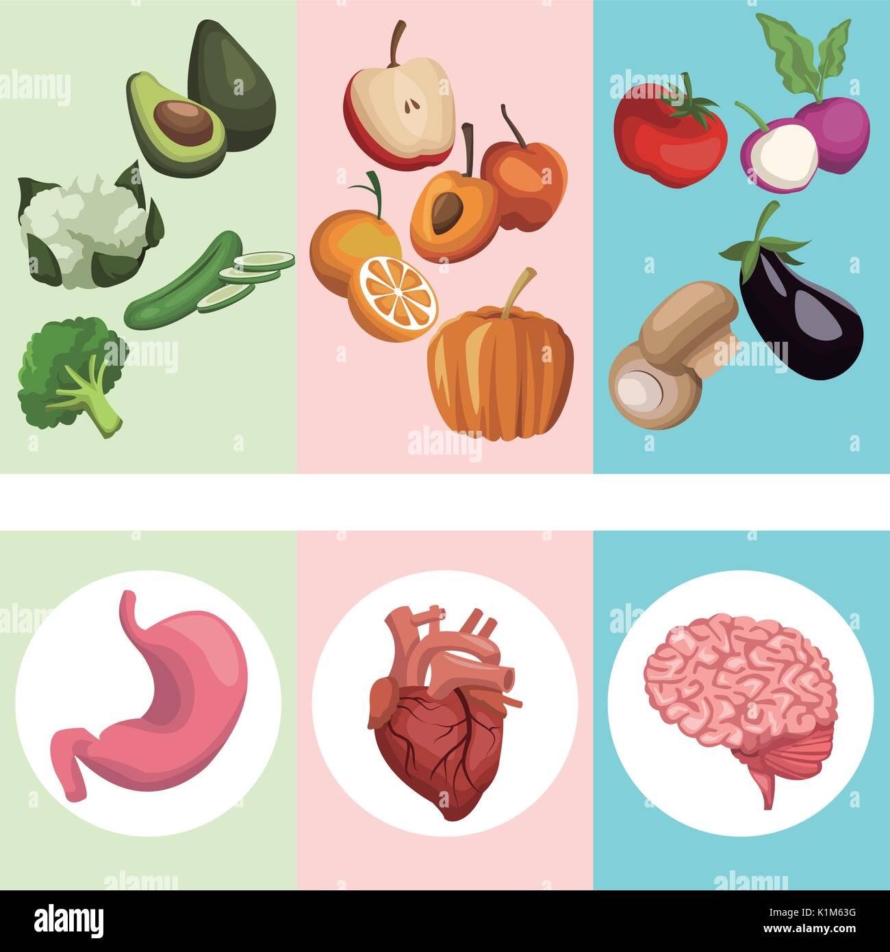 Anatomy Body Poster Stock Photos & Anatomy Body Poster Stock Images ...