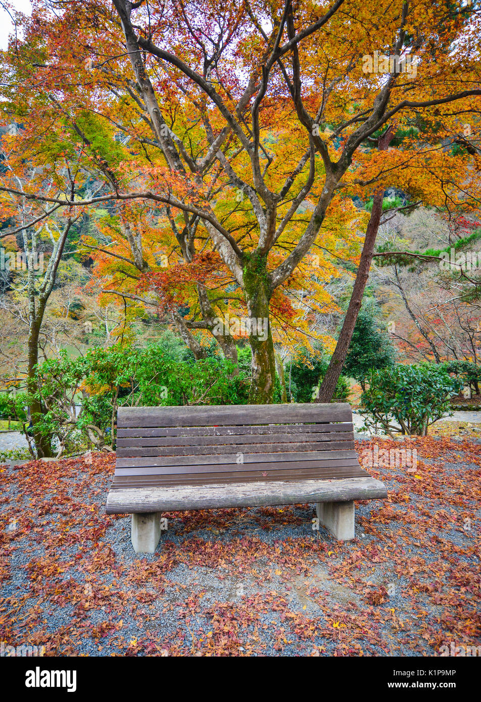 Terrific Bench Japanese Maple In Garden Stock Photos Bench Japanese Andrewgaddart Wooden Chair Designs For Living Room Andrewgaddartcom