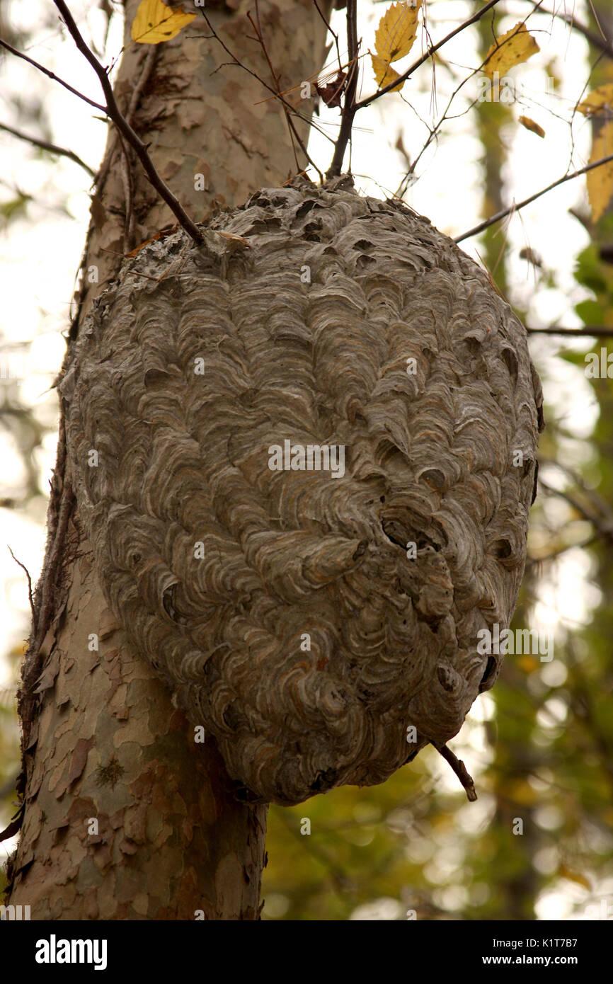 Wasps Nest House Stock Photos & Wasps Nest House Stock ...