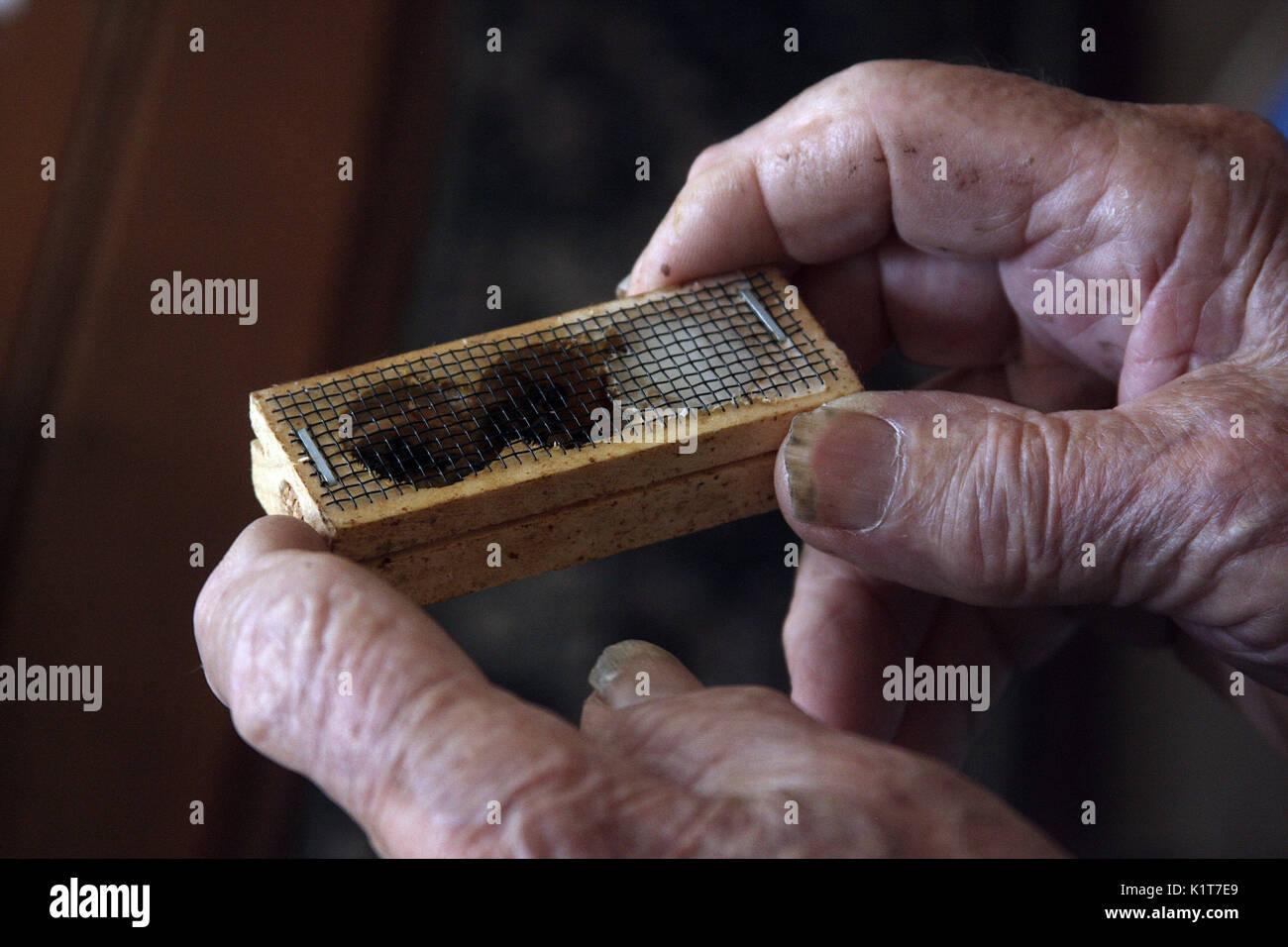Close up of old man's hands, with rheumatoid arthritis - Stock Image