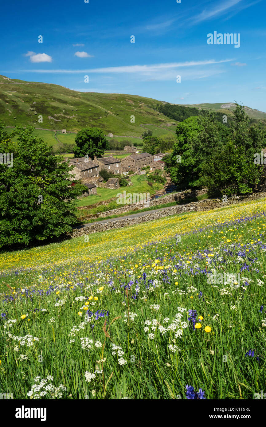 Wild Flower Meadows, Swaledale, Yorkshire Dales National Park, Yorkshire - Stock Image
