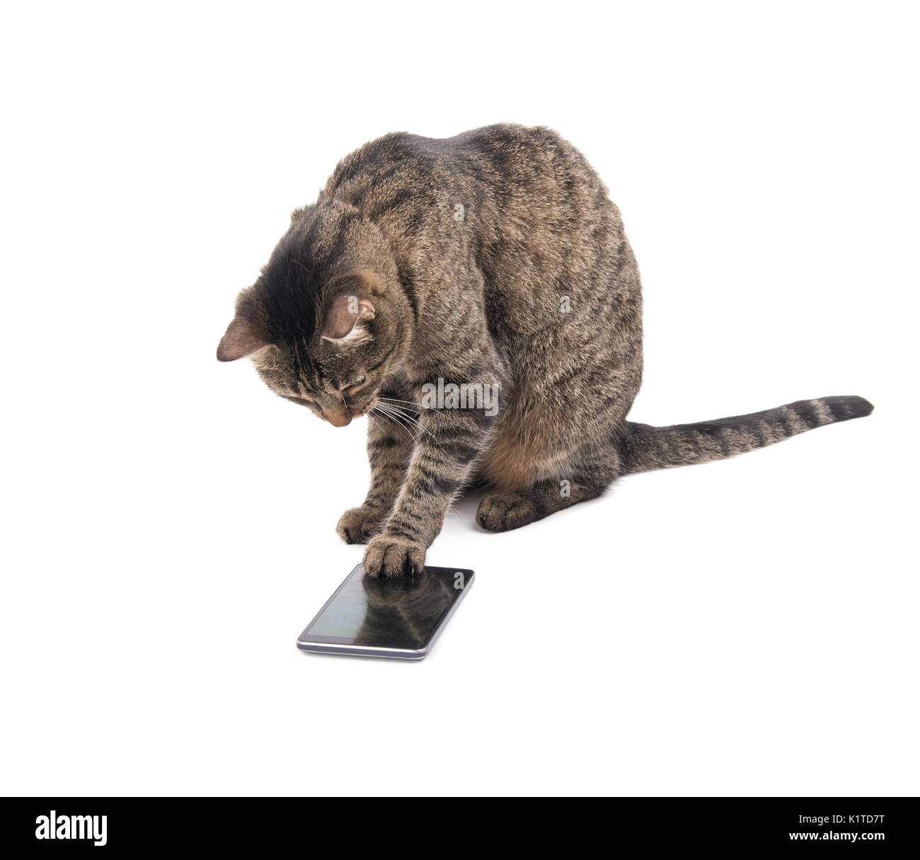 Brown tabby cat tapping on a smart phone screen with her paw, on white - Stock Image