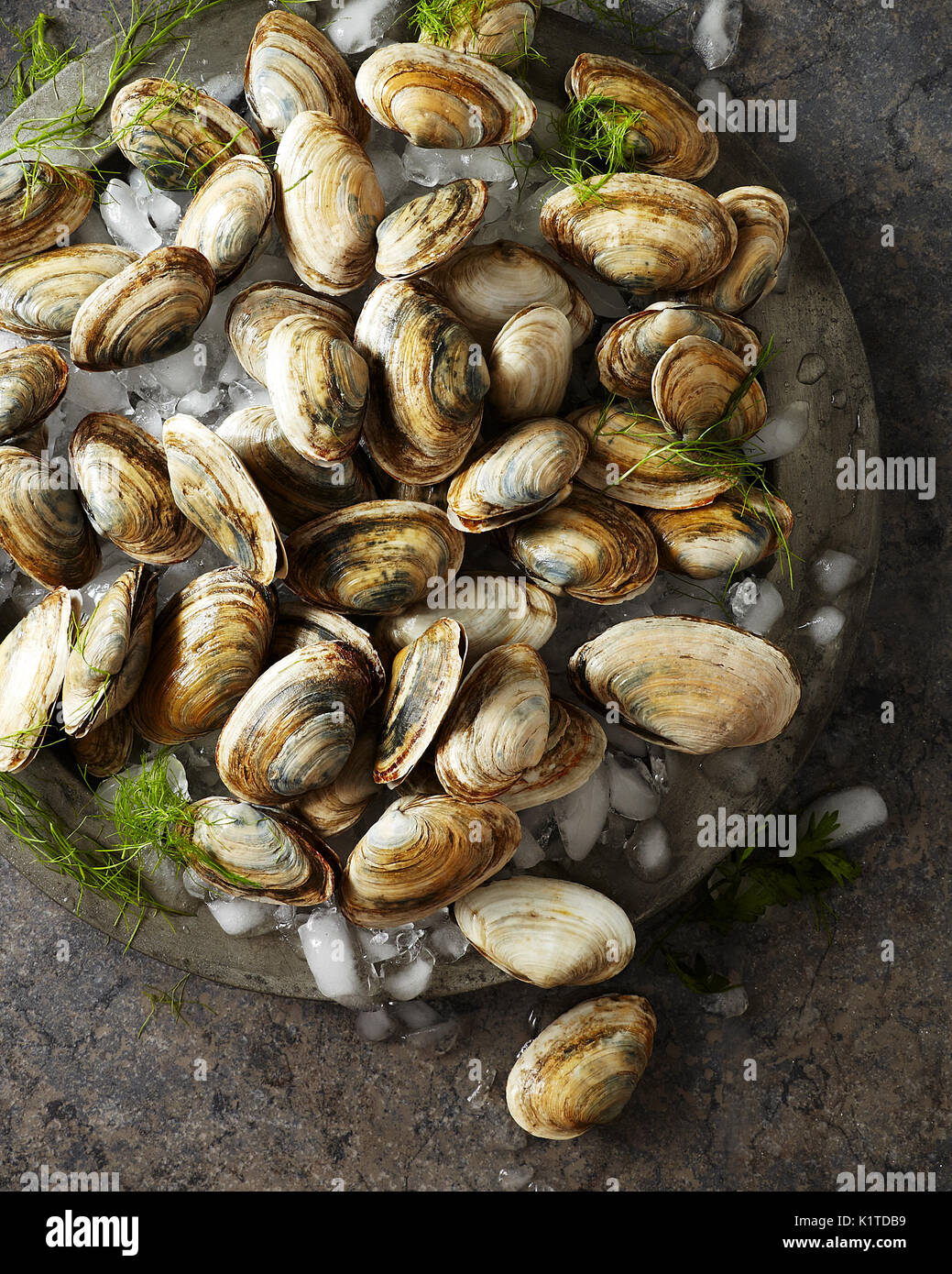 Raw whole clams on crushed ice sitting on an antique silver platter - Stock Image