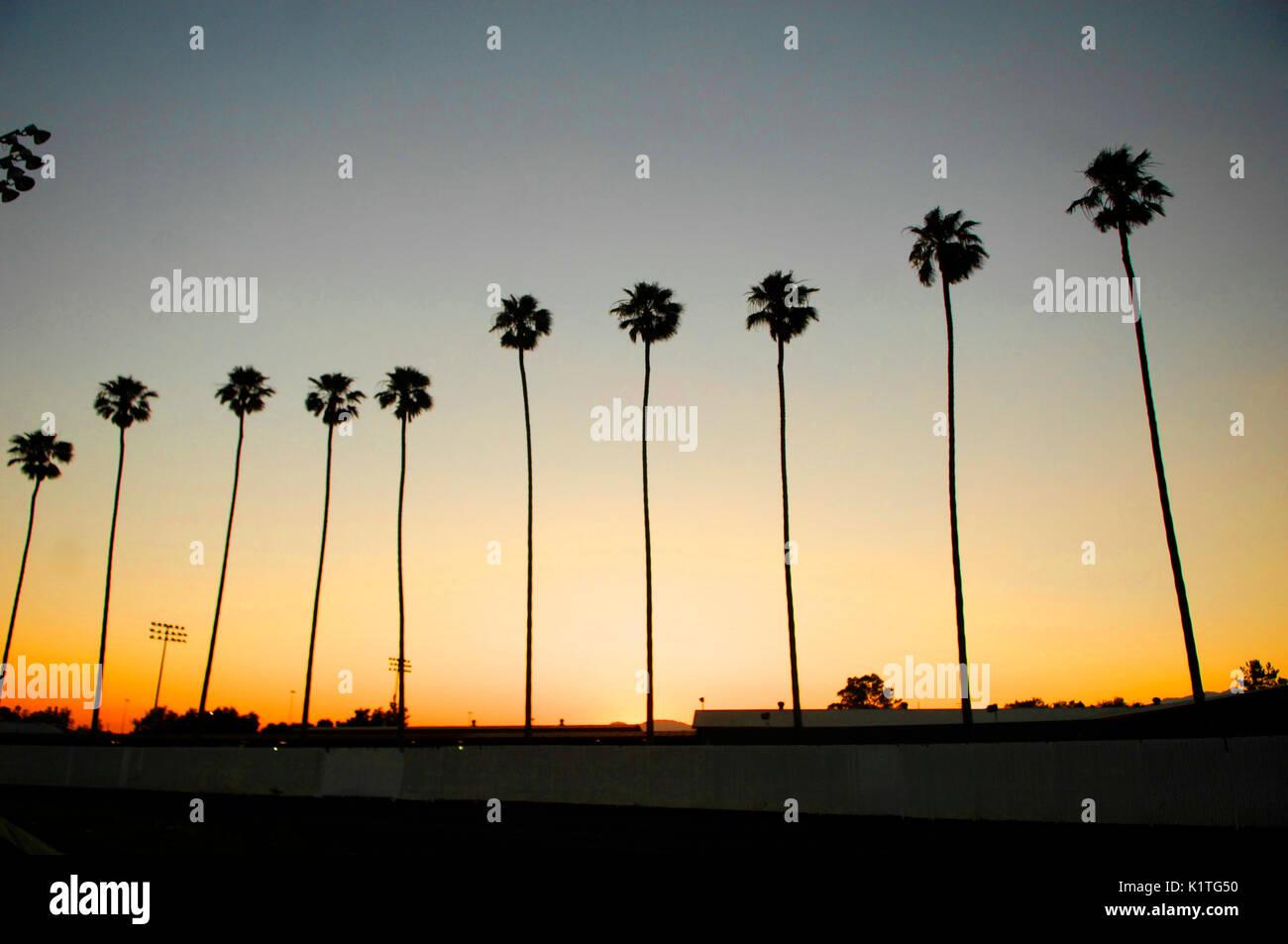 Palm tree sunset 2008 Vans Warped Tour Pomona Fairgrounds Pomona. - Stock Image