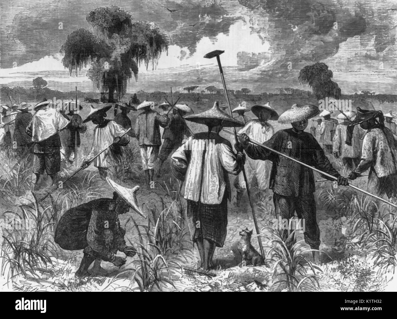 a discussion on cheap labor force of chinese and japanese origin in america in the 1890s Beginning in the 1880s and 1890s,  100,000 chinese, japanese,  growers and industrialists for cheap labor and the usphs's mandate to protect the nation's.