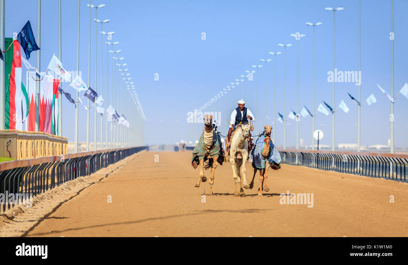 Dubai, United Arab Emirates - March 25, 2016: Practicing for camel racing at Dubai Camel Racing Club, Al Marmoom, UAE - Stock Image