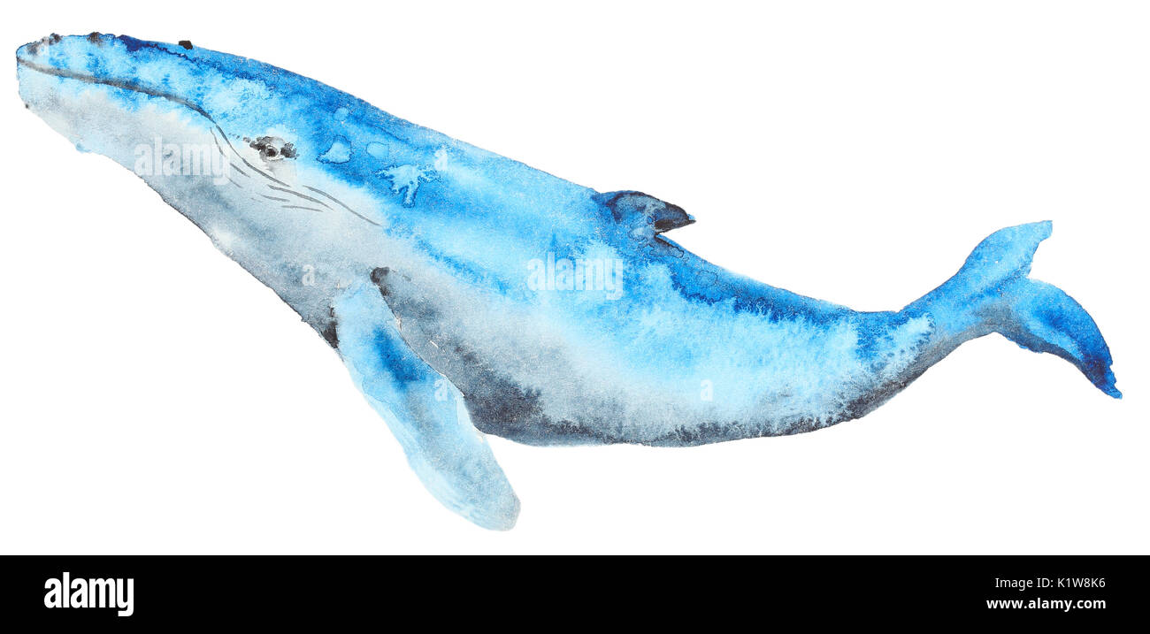 Blue Whale Cut Out Stock Images & Pictures - Alamy