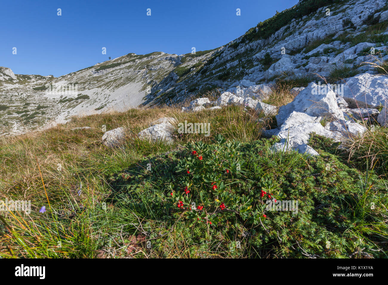 Europe, Italy, Veneto, Belluno. In the Alpe Ramezza along the Alta Via no. 2 of the Dolomites. On the background the Ramezza mountain. Belluno Dolomit - Stock Image