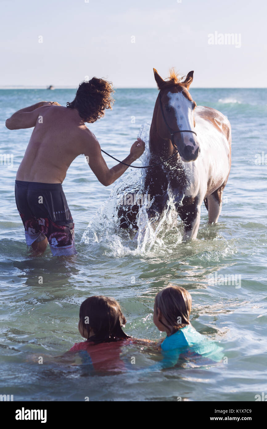 A man washing a horse and its litter in the sea in Jericoacoara, Ceará, Brasil - Stock Image