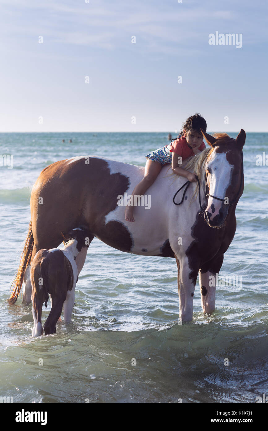 A little girl mounting a horse in the ocean while it feeds her litter in Jericoacoara, Ceará, Brasil - Stock Image