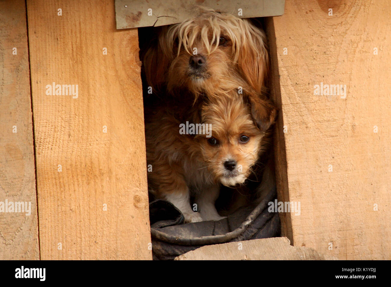 Dog Guarding House Stock Photos Amp Dog Guarding House Stock