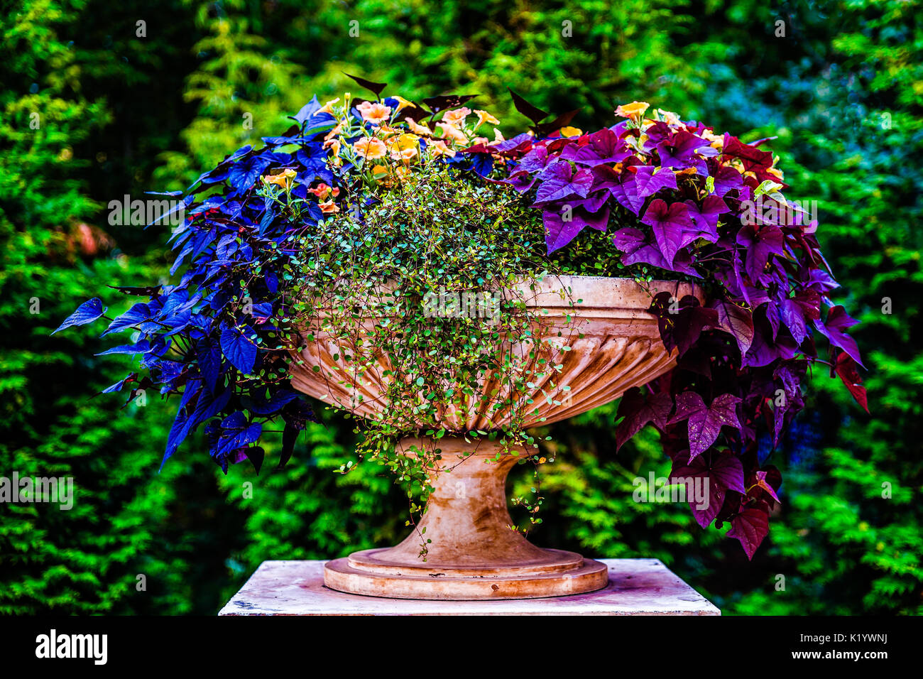 Decorative Park Urn Or Bowl Filled With Beautiful Colorful Plants