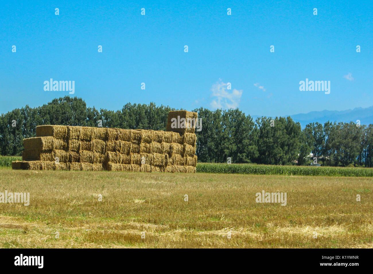 Rectangular pille of starws in the field Stock Photo