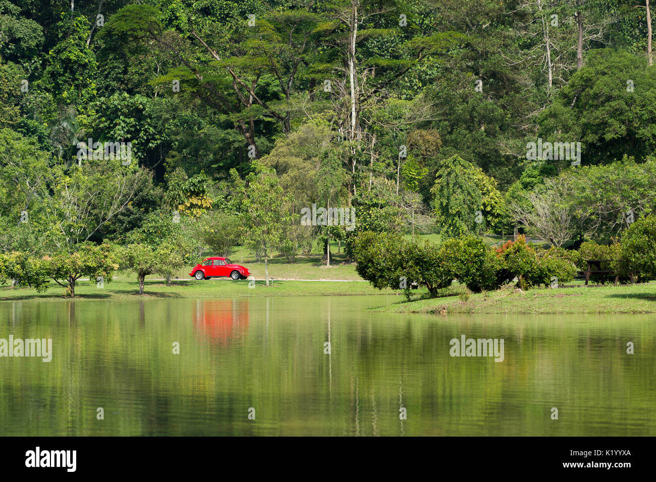 A classic bright red VW Volkswagen Beetle parked in a out of place setting of a tropical forested park by a lake, Stock Photo