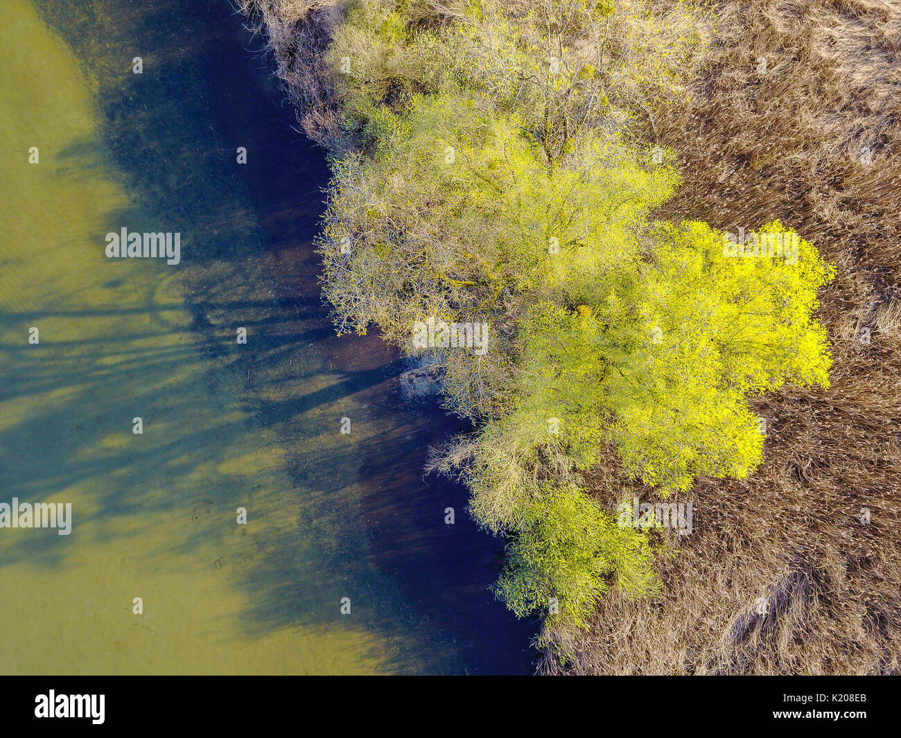 Aerial view, tree from above, aerial view, Prien am Chiemsee, Upper Bavaria, Bavaria, Germany Stock Photo