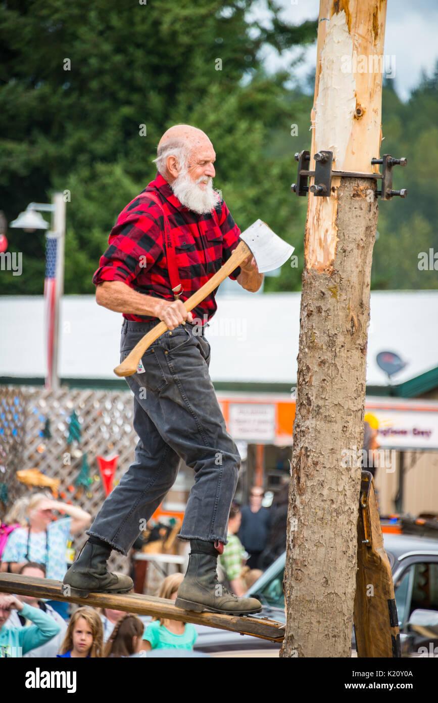 Man with Ax on Springboard to Chop Down Tree Trunk Lumberjack Skills Demonstration Evergreen State Fair Monroe Washington - Stock Image