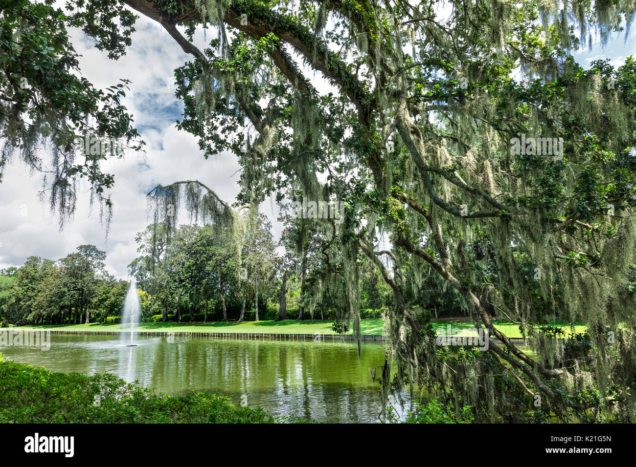 A View Of The Gardens At Middleton Place Plantation In Charleston, South  Carolina, USA