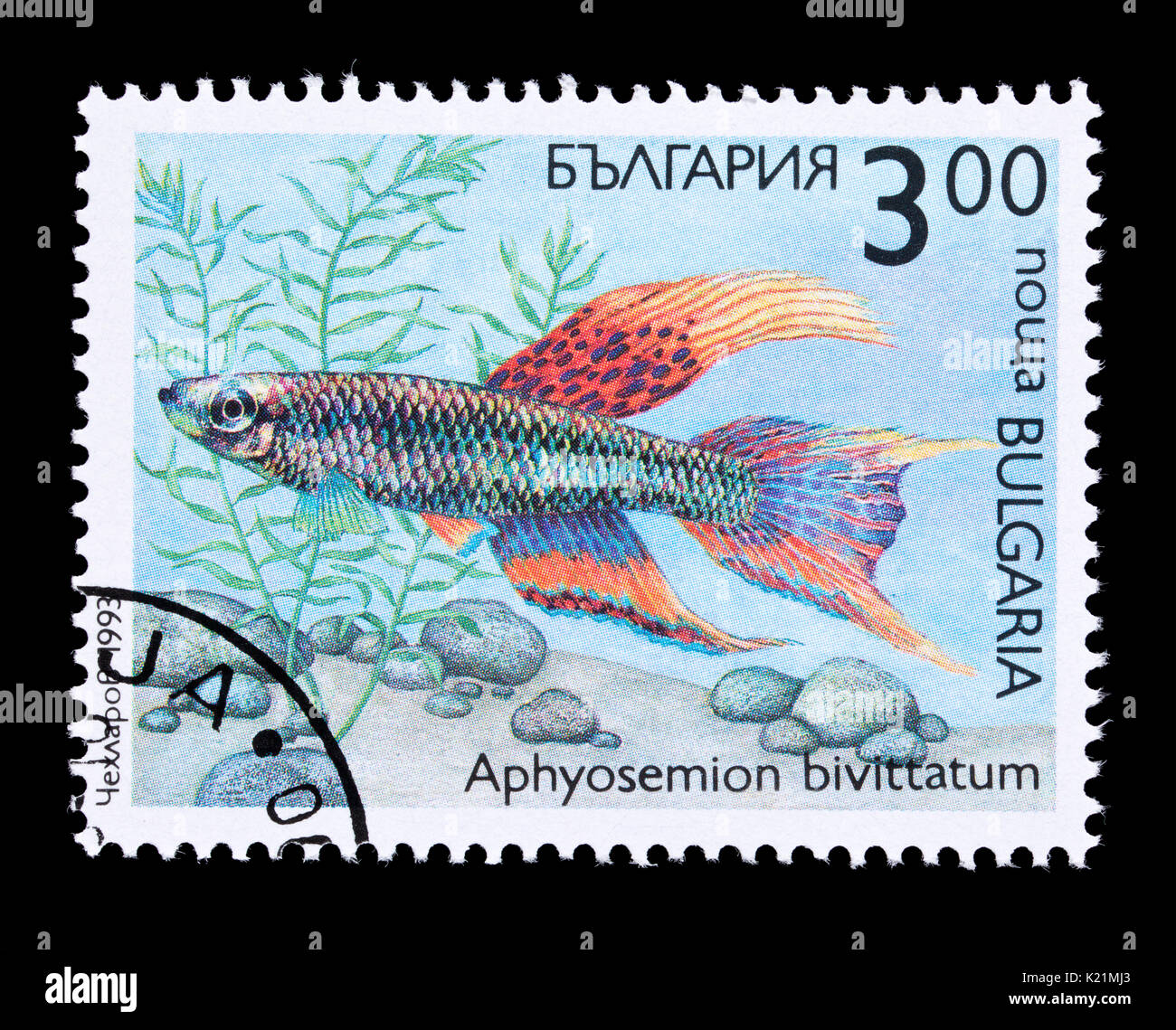 Postage stamp from Bulgaria depicting a Twostripe lyretail fish (Aphyosemion bivittatum) - Stock Image