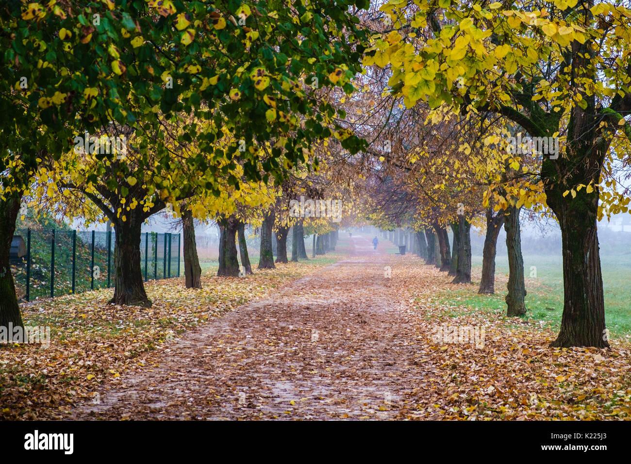 Path of Remembrance and Comradeship near Golovec hill, Ljubljana. - Stock Image