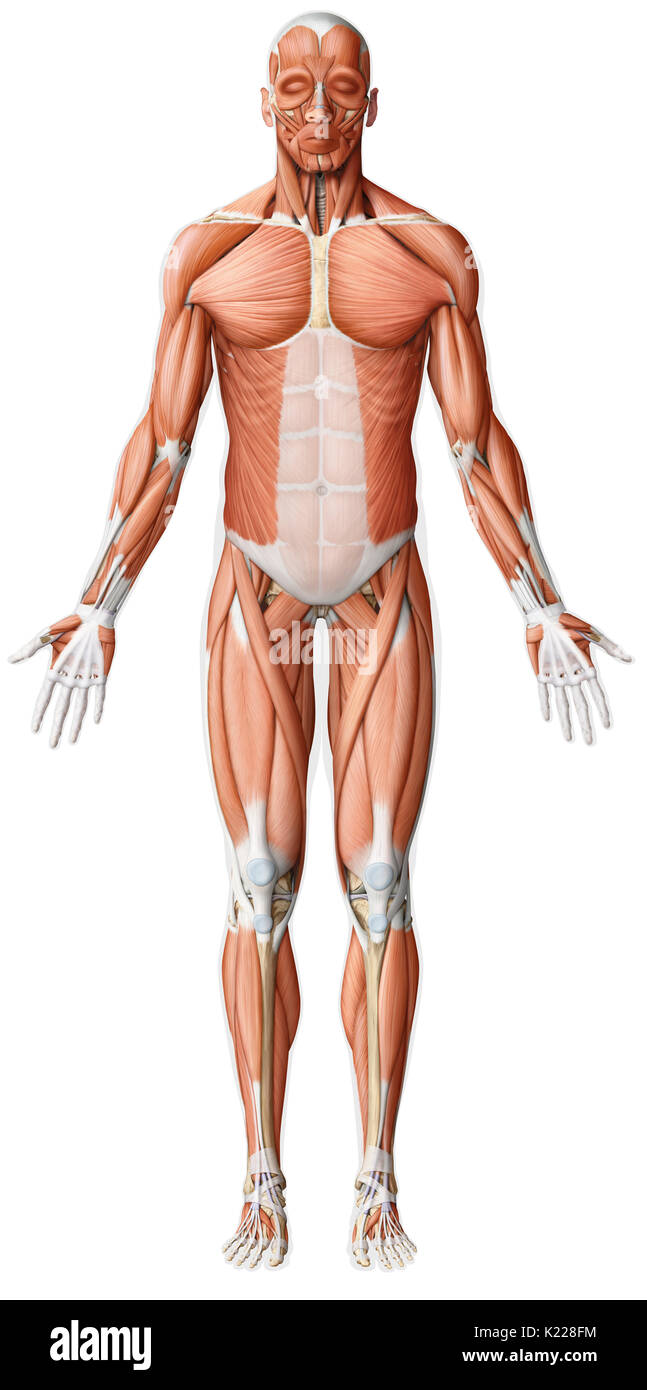 While the movements of the smooth muscles are always involuntary ...