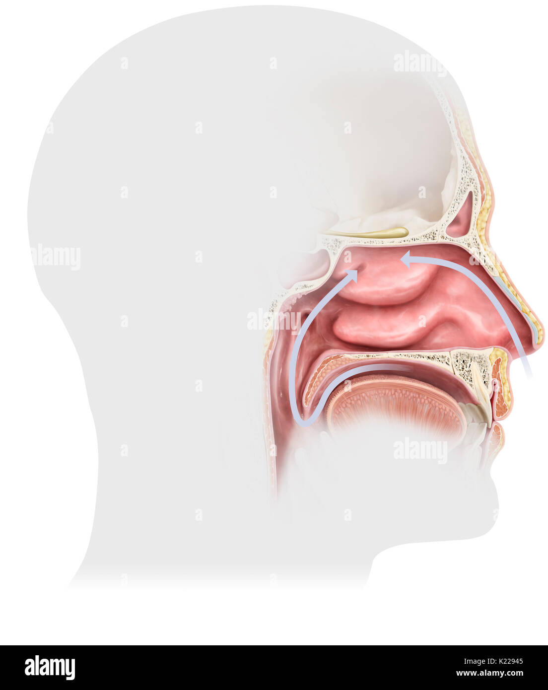 Mucus Stock Photos & Mucus Stock Images - Alamy