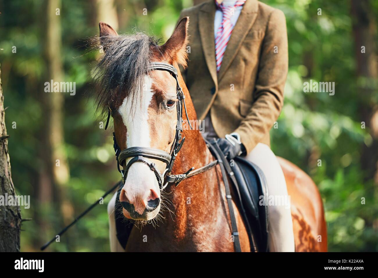 Girl in formal wear riding a horse in forest. - Stock Image