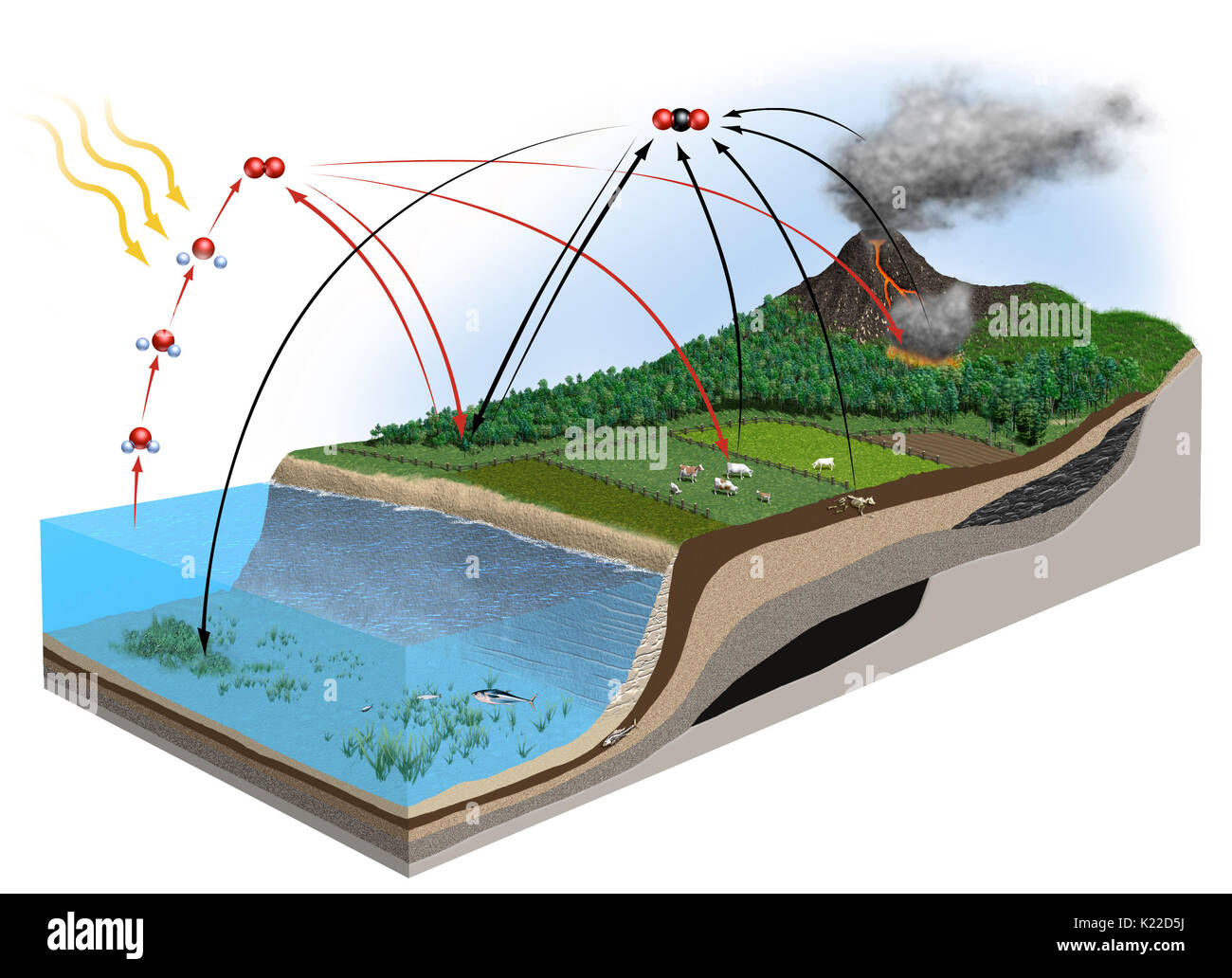 A number of interactions that cause oxygen and carbon, two elements essential to life, to circulate through the biosphere. - Stock Image
