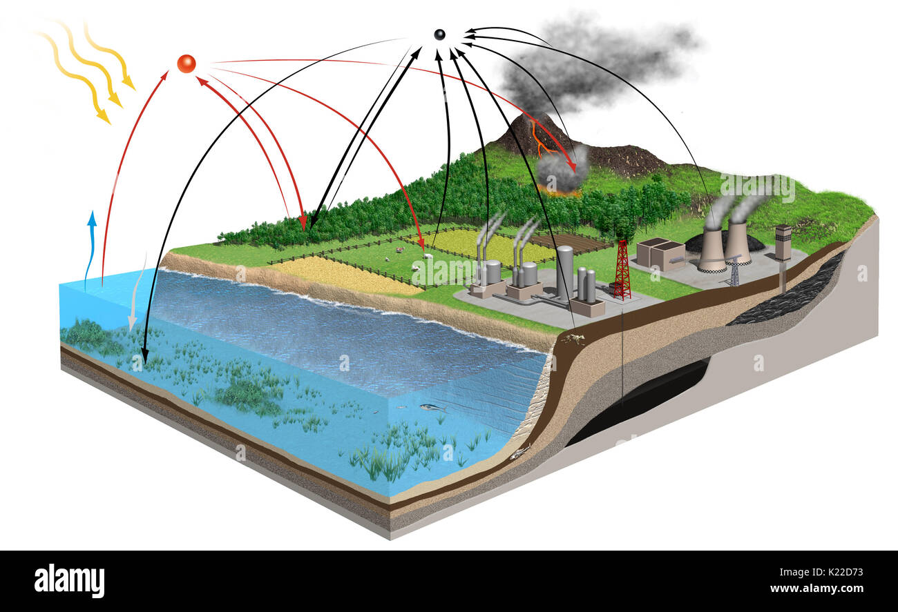 Carbon oxygen cycle stock photos carbon oxygen cycle stock images a number of interactions that cause oxygen and carbon two elements essential to life ccuart Images