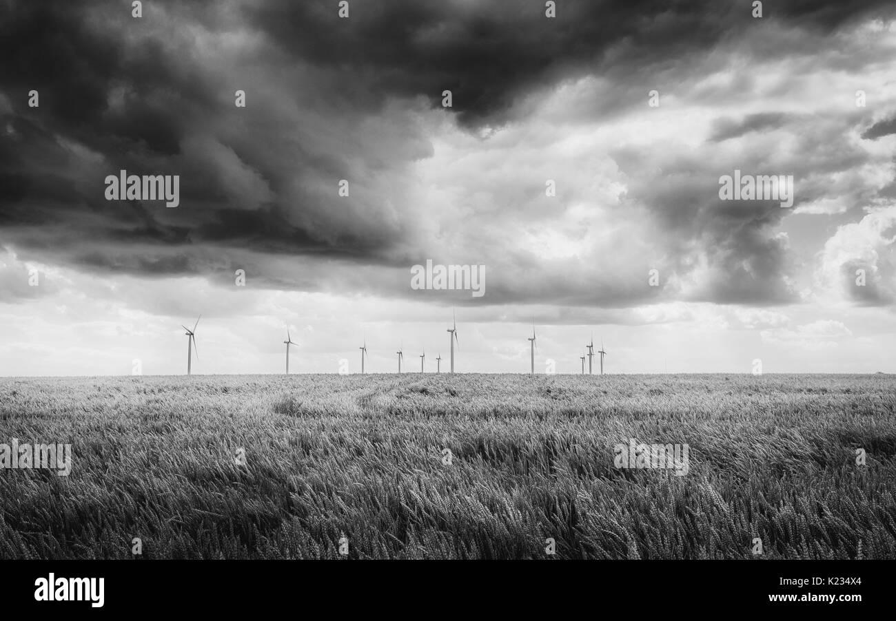 Lissett, Yorkshire, UK. Wheat field ripe for harvesting and group of modern wind turbines on horizon in monochrome neart Lissett, Beverley, Yorkshire, - Stock Image