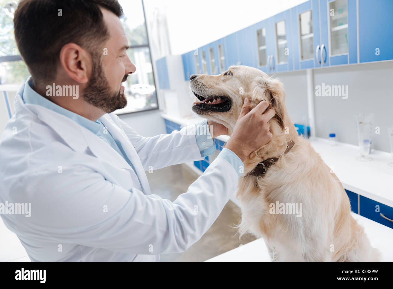 Positive delighted bearded man working with animals - Stock Image